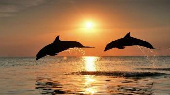 DolphinSunset