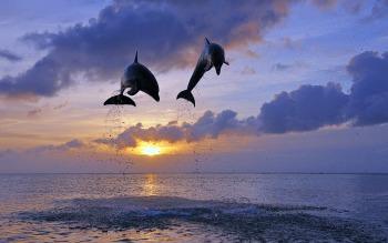DolphinSunset2