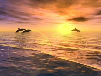 DolphinSunset3